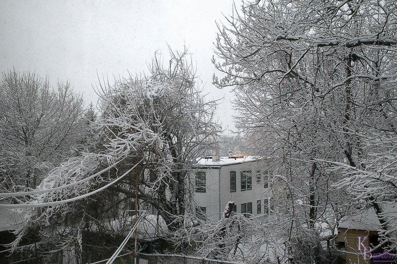 This was the view outside my bedroom window on February 10th 2010, when I woke up to what seemed like the 100th snow storm of the year.