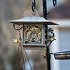 DSC_9299 woodpecker