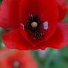 DSC_5210  spring scenes from Snug Harbor_DxO