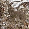 DSC_3857 the deer of Clove Lake