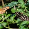 DSC_7336 Butterfly Gardens