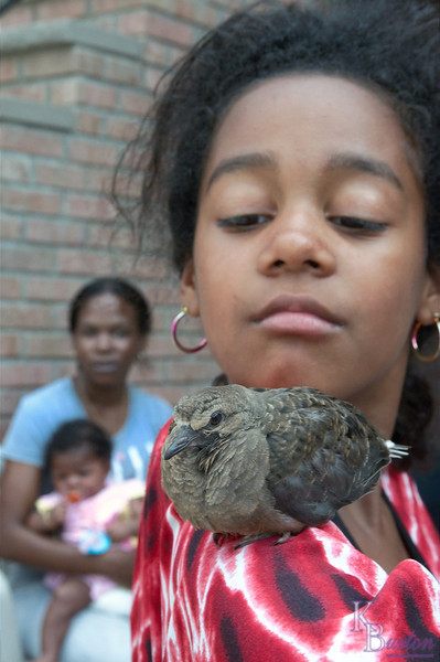 Turns out the girls discovered an injured bird in the lot of the Rectory two houses down from my place, and decided to try and nurse it back to health. Obviously the bird didn't seem to mind the TLC, and felt quite at home here on Yalani's shoulder.