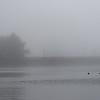 DSC_6939 Silver Lakes in the fog_DxO