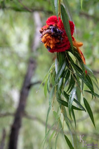 DSC_1428 flower power