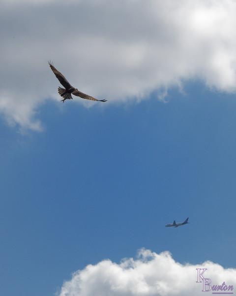 DSC_6865 birds in flight_DxO