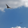 DSC_6865 birds in flight_DxO