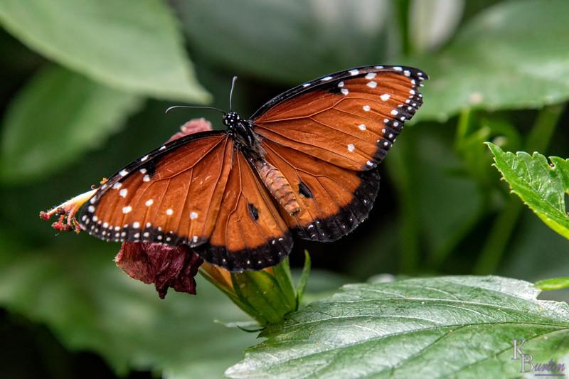DSC_0756 scenes from butterfly gardens