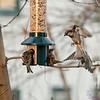 DSC_2430 backyard feeder