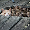 DSC_4125 male cat
