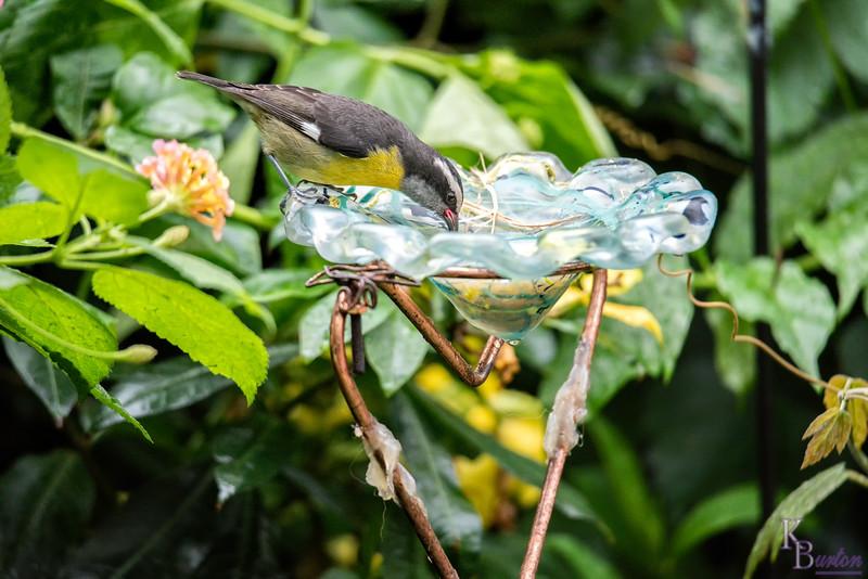 DSC_0594 - scenes from the butterfly gardens