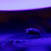 DSC_5553 psychedelic fly_DxO
