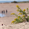 DSC_0477 scenes from New Dorp beach_Nik_DxO