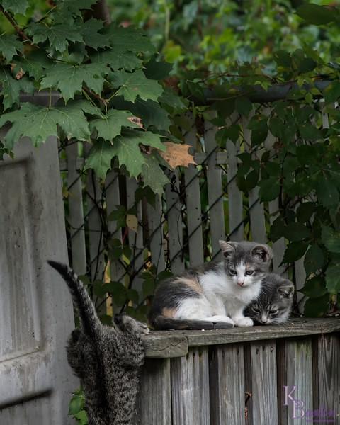 DSC_7334 kitten play