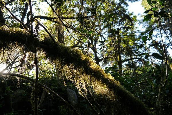 Beautiful dappled sunlight through the trees