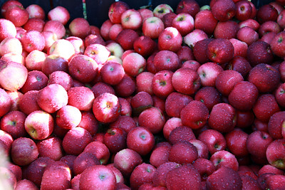 10-14-10 McQueens Apple Orchard Trip Taylor Learning Center