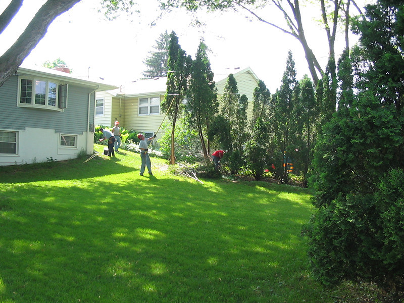 arbor vidae and maple tree removed by Hathaway