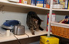 Saturday is for PIE! Bad cat in the pantry