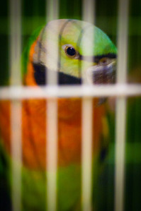037 Parrot Young: I was really sick this week!
