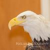 20130428 Eagle 32