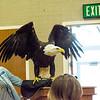 20130428 Eagle 74