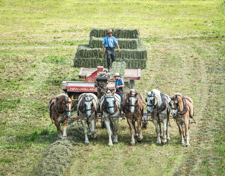 Amish Baling Hay With Six Mule Team