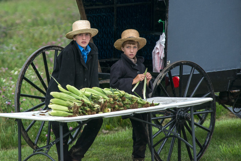 Amish Boys Selling Corn At Roadside Stand