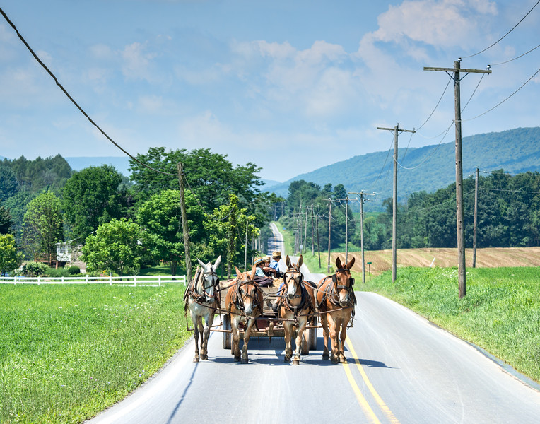 Four Mule Team On Country Road