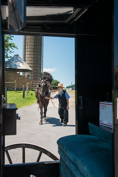 Amish Farmer Leading Horse To Buggy