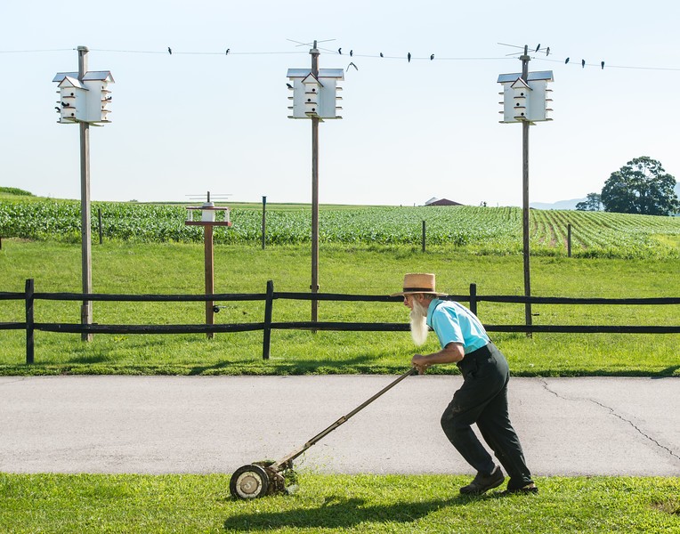Amish Man Mowing Lawn In Front Of Marten Bird Houses