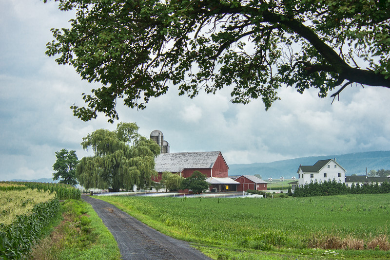 Amish Farm In Rain