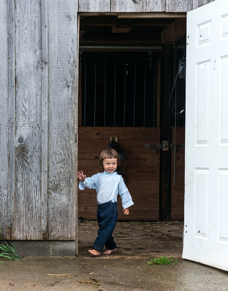 Young Amish Boy In Horse Barn