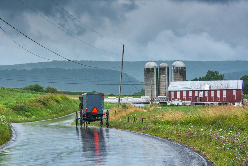"Amish Buggy Approaches ""English"" Farm On Country Road"