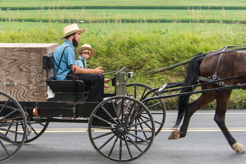 Curious Young Amish Boy On Buggy With Dad