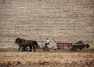 Amish Manure Spreader