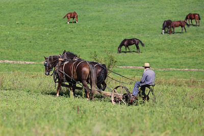 I've noticed that this Old Order Amish man uses only horse power in his farming, most of his neighbors use steel-wheeled tractors.  He has some very beautiful horses...and I love in this image that his head is turned looking at them, no doubt with admiration.