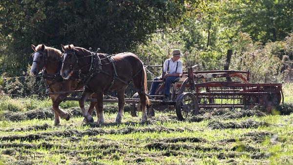 Amish Raking Hay