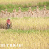 harvesting-2