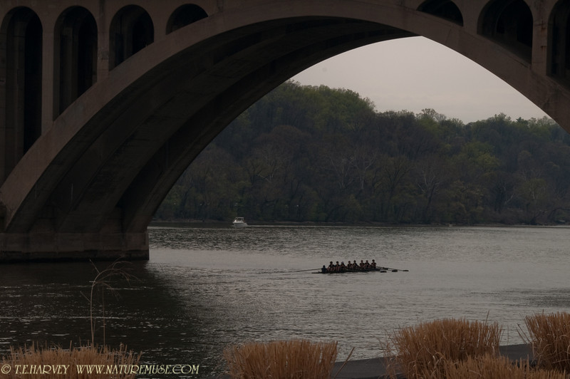 Regatta Waiting. Shot during the DC Cherry Blossom Events.