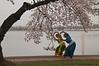 Cherry Blossom Dancers.  Konark Dance School.