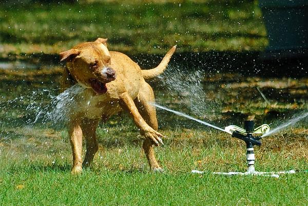 Oh Boy, a Sprinkler!