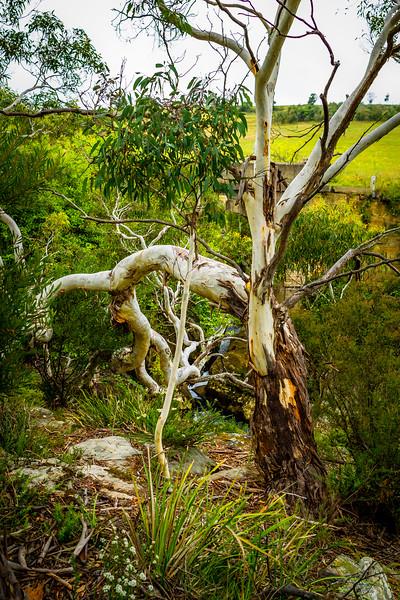 Near Berrima, NSW, Australia