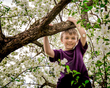 Little Boy in Crabapple Tree
