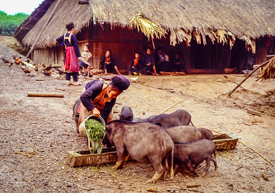 A glimps of daily life in a hmong village 1987