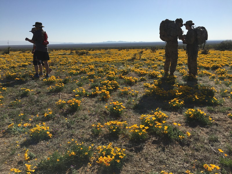 Hey, out of nowhere - waving golden poppies cheered us on.