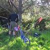 Lean bike on tree