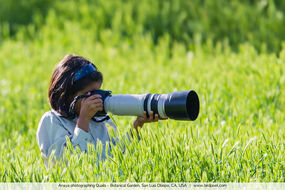 Anaya photographing Quails - Botanical Garden, San Luis Obispo, CA, USA
