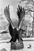 Eagle (2002).