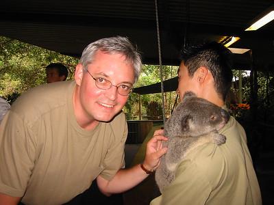 Koalas outside Brisbane