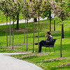 Toronto - University park