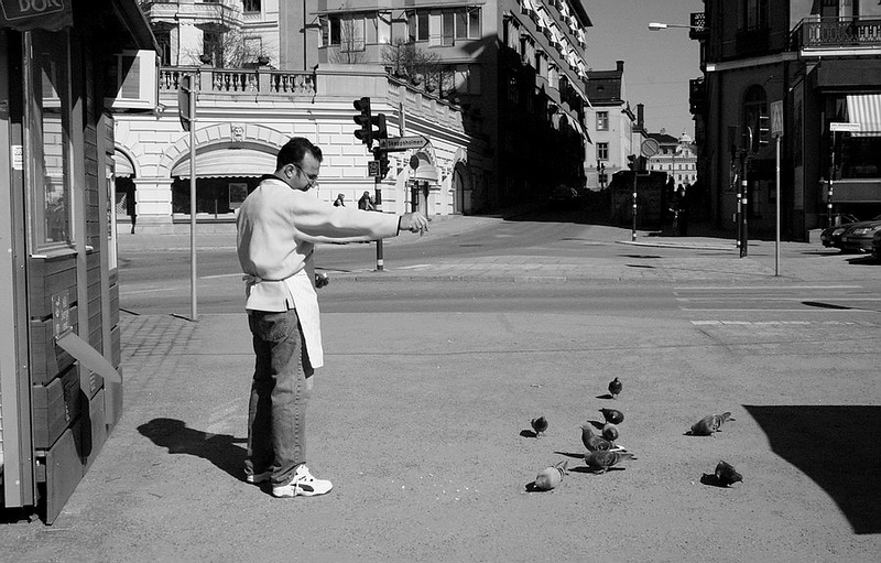 Shopkeeper in Stockholm Feeds Birds - Sweden by Paw Prints Nature & Wildlife Photography